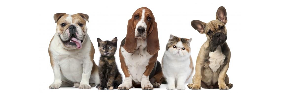 Prekės gyvūnams